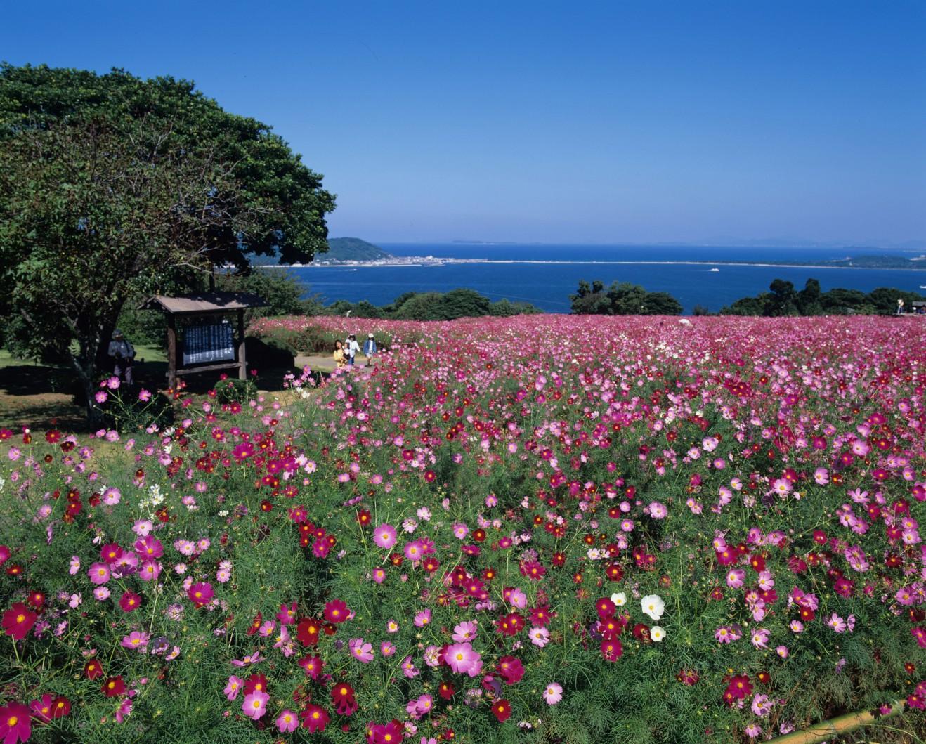 豊かな自然と景観を守り、海と歴史を生かしたまちづくり